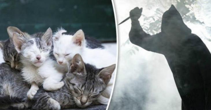 Un tueur de chats en série activement recherché !