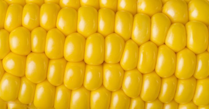 Mauvaise nouvelle pour les amateurs de maïs