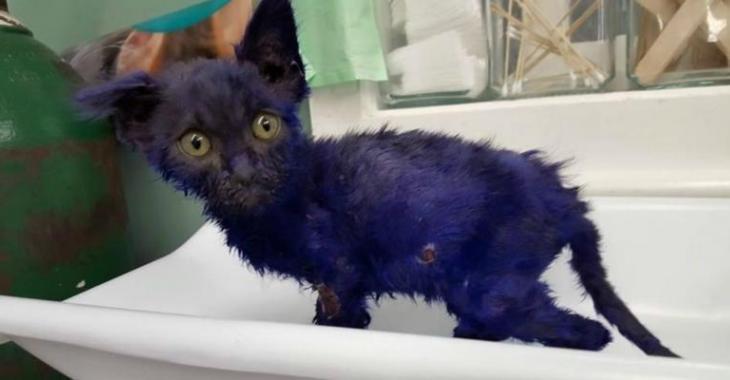 Vidéo – Un petit chaton victime des pires atrocités !