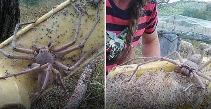 Si vous avez une phobie des araignées, cet article n'est pas pour vous.