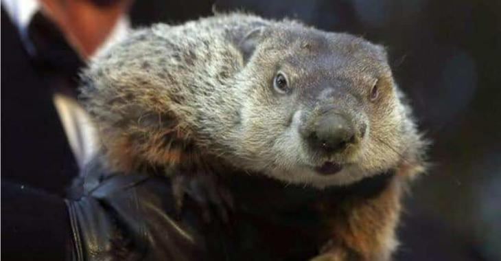 MÉTÉO |La marmotte s'est prononcée!