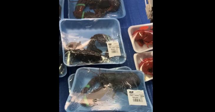 Un supermarché d'Amos cause la controverse en emballant ses homards vivants.