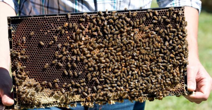 Un apiculteur de la Montérégie perd près de 600 ruches en 10 jours