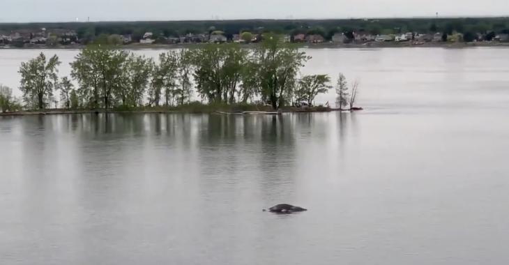 La baleine venue dans les eaux de Montréal serait échouée à Varennes