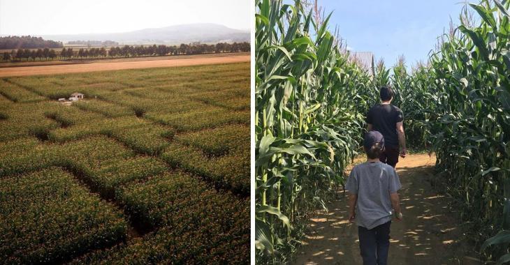 Les Québécois pourront bientôt aller s'aventurer dans un labyrinthe géant de blé d'Inde.