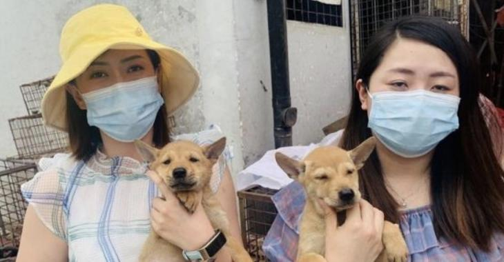 Des chiots sont sauvés d'un festival de viande de chien où les animaux sont massacrés et bouillis.