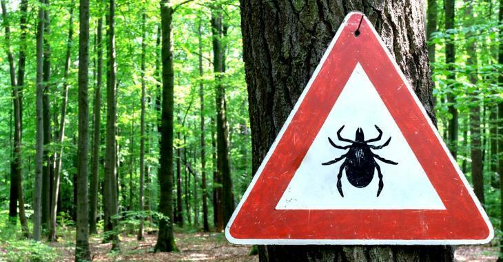 Les tiques gagnent du terrain au Québec et les cas liés à la maladie de Lyme sont en hausse.