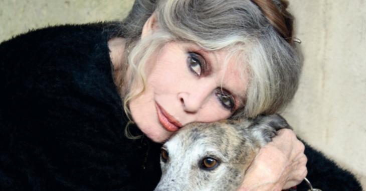 Brigitte Bardot trouve que la France est gouvernée par des lâches
