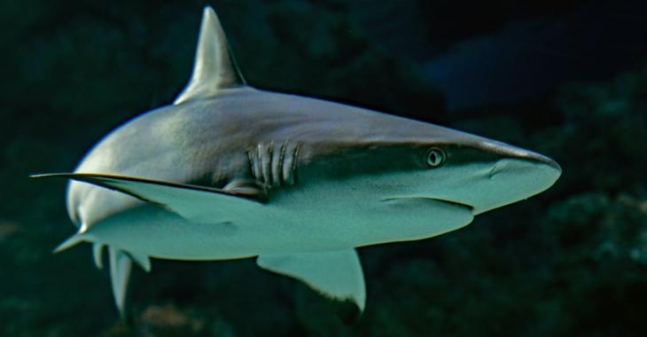 Un adolescent de 15 ans tué par un requin