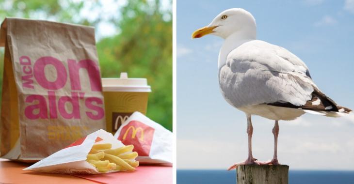 Un homme attaque une mouette qui voulait lui voler son McDonald's avec ses dents