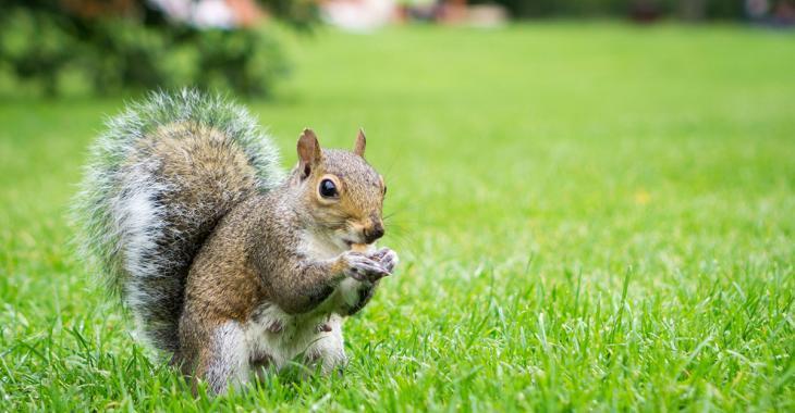 Un cas de peste humaine, contaminé par un écureuil, détecté au Colorado