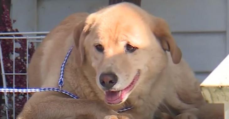 Un chien fait 90 km pour retrouver son ancienne maison