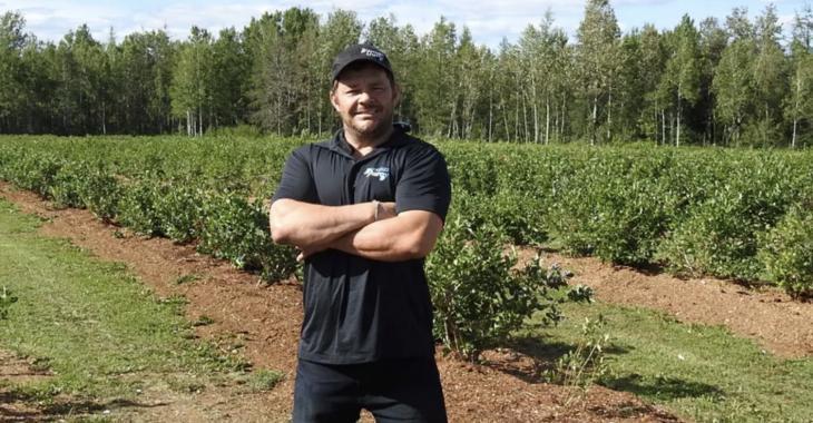 Un producteur de bleuets offre à la population de venir vider ses champs gratuitement.