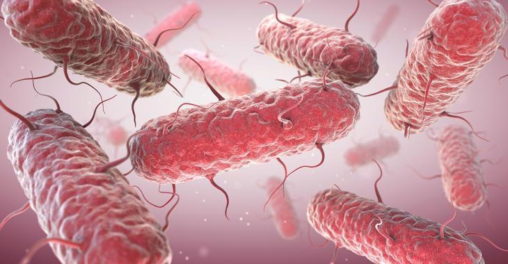 Avis de santé publique: éclosion de Salmonella dans au moins cinq provinces du Canada