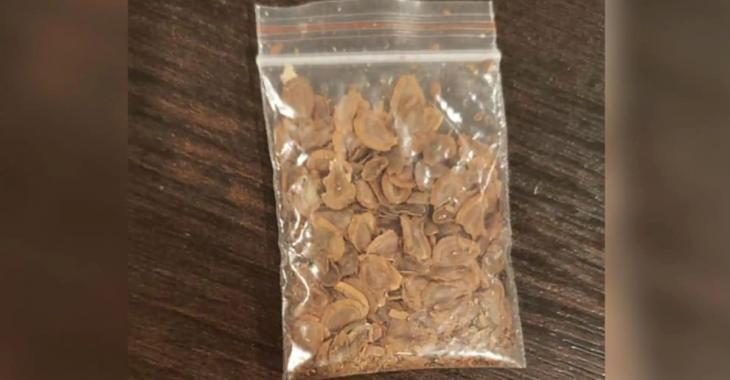 Des Canadiens reçoivent de curieuses semences de Chine sans les avoir commandées