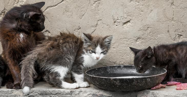 Des dizaines de cadavres de chats congelés découverts dans la maison insalubre d'un couple âgé