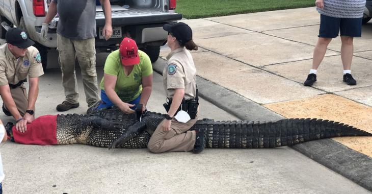 Un père de famille sauve sa fille de 4 ans d'un alligator de 12 pieds