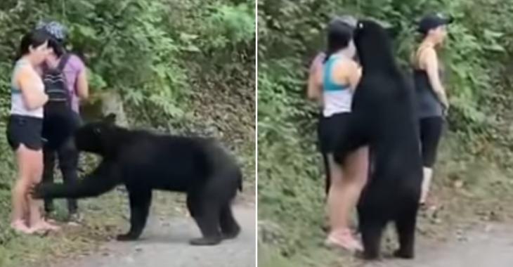 L'ours noir qui avait été vu en train de renifler une femme a été castré