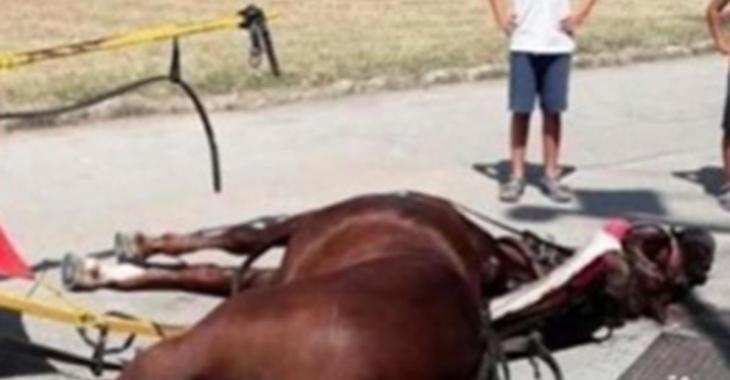 Un cheval qui transportait des touristes meurt d'épuisement en raison de la chaleur en Italie