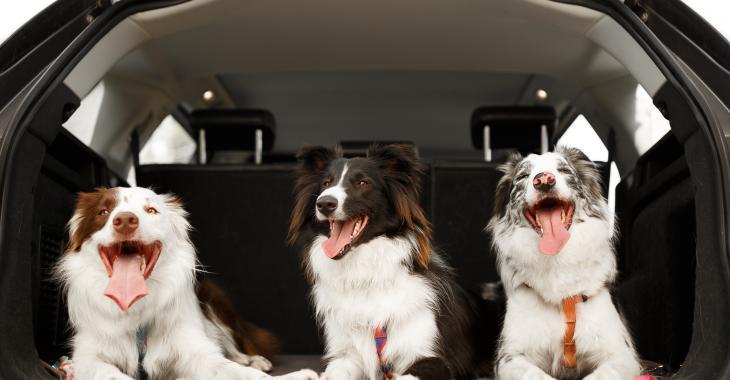 Un chasseur cause la mort de trois chiens après les avoir oubliés dans une voiture.
