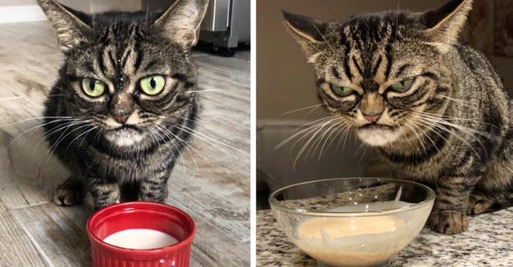 """Un nouveau """"grumpy cat"""" affole le web et il est encore plus grincheux que son prédécesseur"""