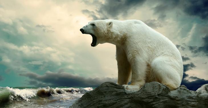 Tué par un ours polaire dans un camping